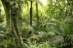Business intelligence gathering is revolutionizing rainforest research.