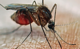 Measuring the Zika Virus's International Security Implications