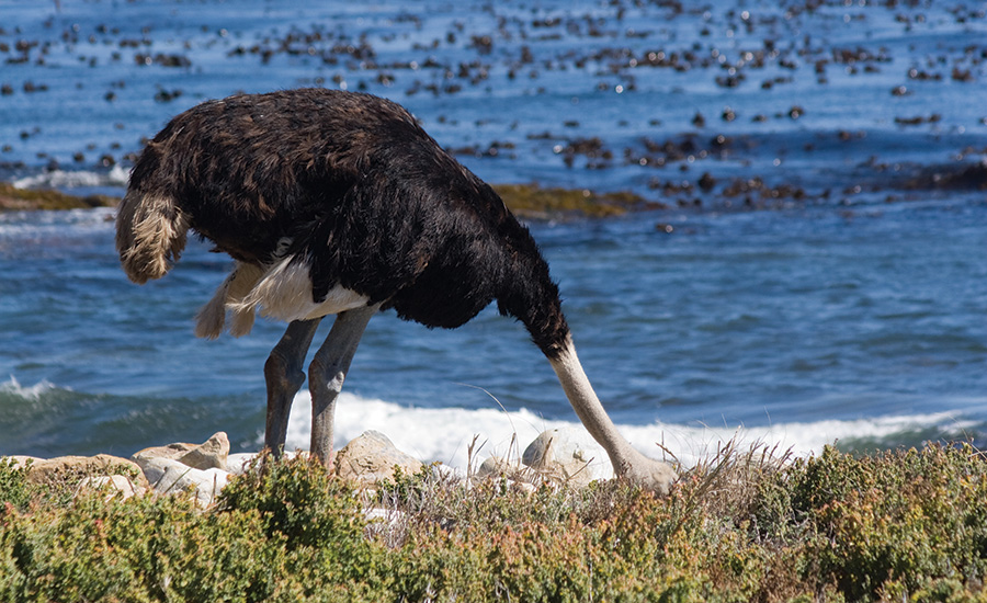 Are CSOs Operating Under the Ostrich Theory of Management?