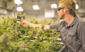 Facing Compliance Challenges, Surveillance Proves Essential to Cannabis Industry Success - Security Magazine