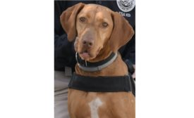 TSA cutest canine contest 2020